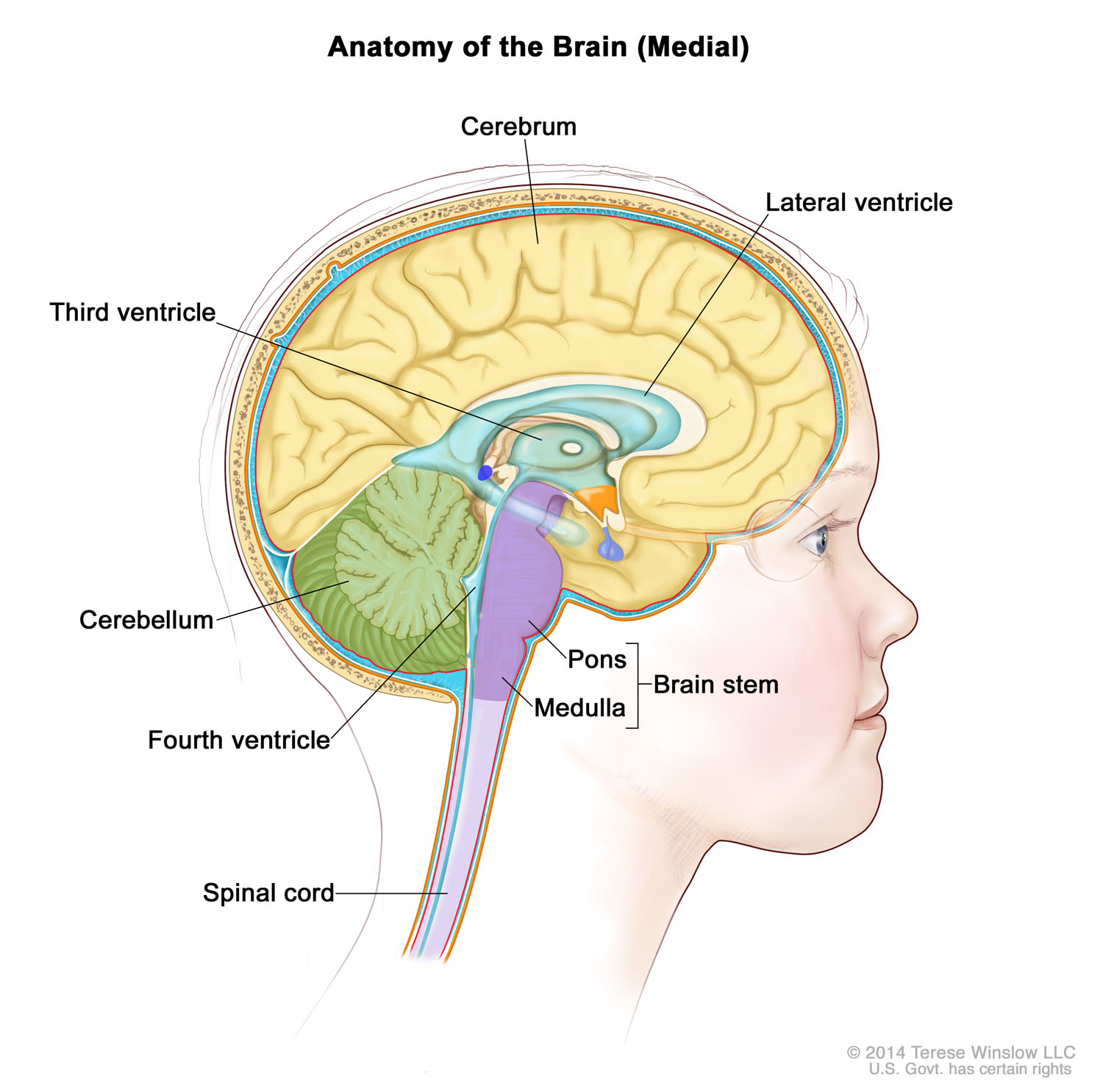 brain-medial-child-ependymoma.jpg