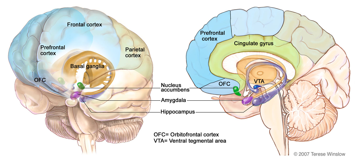 brain-regions-addiction.jpg