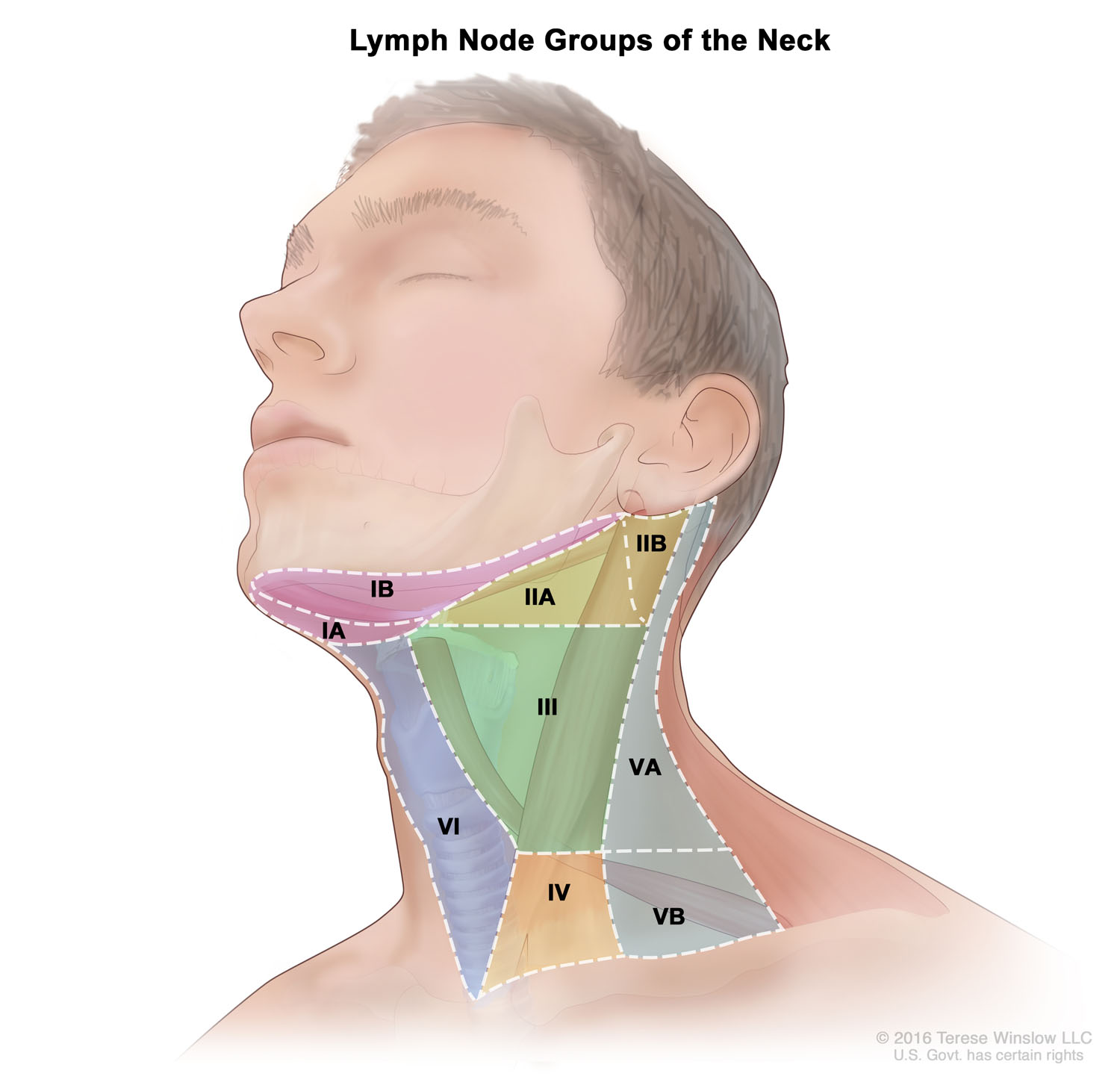lymph-node-groups-neck.jpg