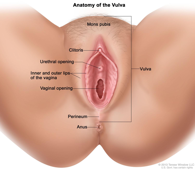 vulva-anatomy.jpg