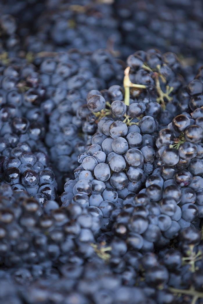 Del Barba grapes