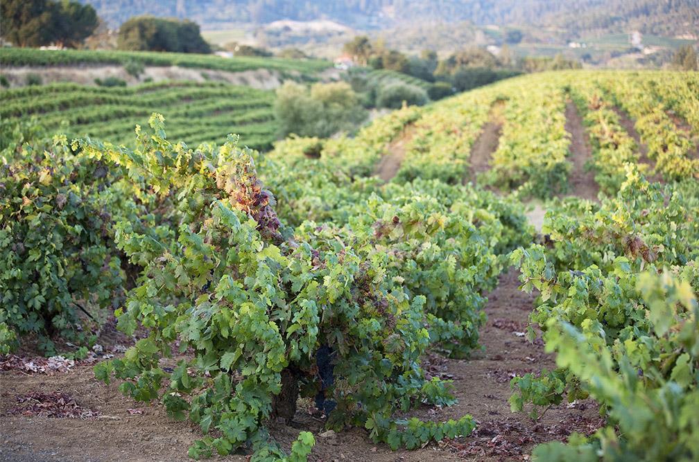 Teldeschi vineyard