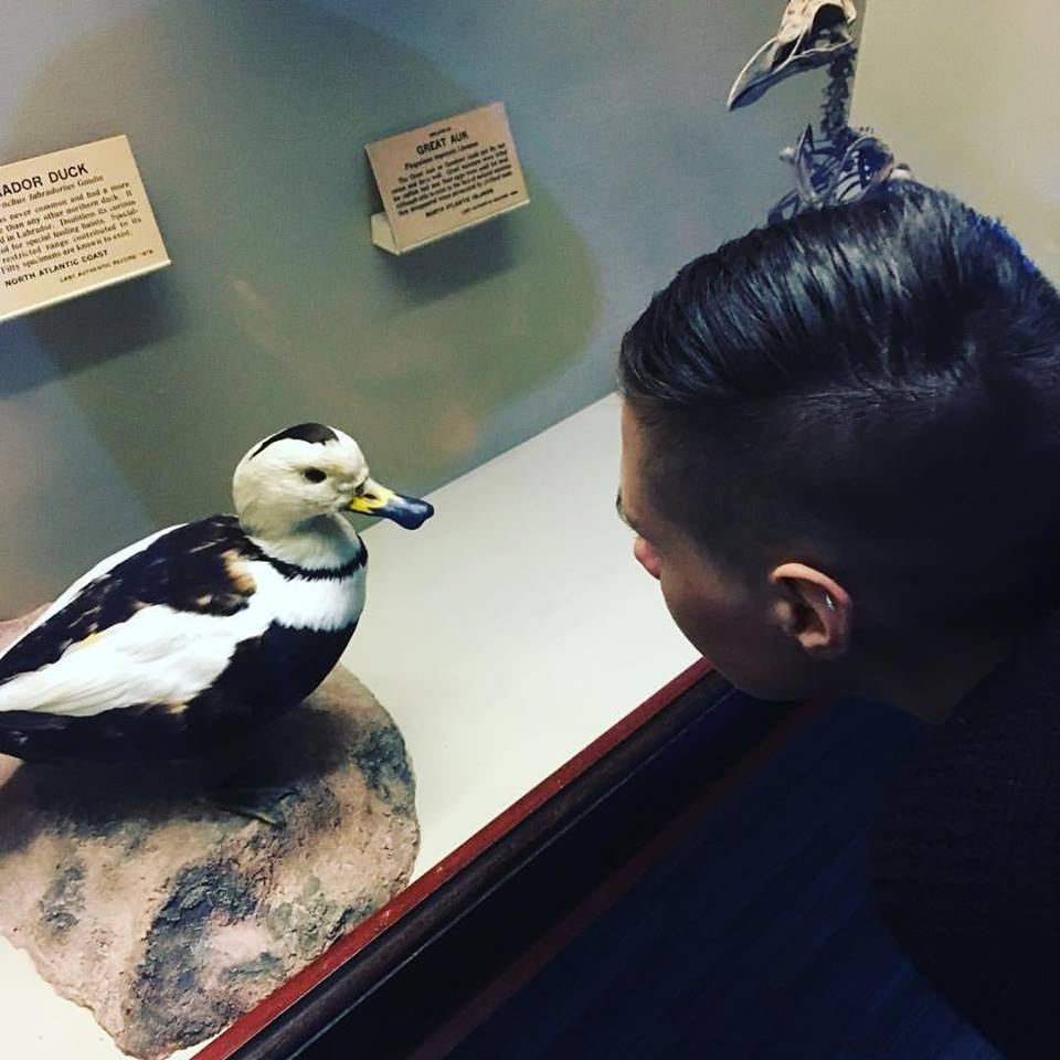 Encountering a duck at the Field Museum.