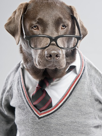 This isn't really me, but I like dogs and this one in particular looks quite smart with his tie and sweater combo. I hope you agree.