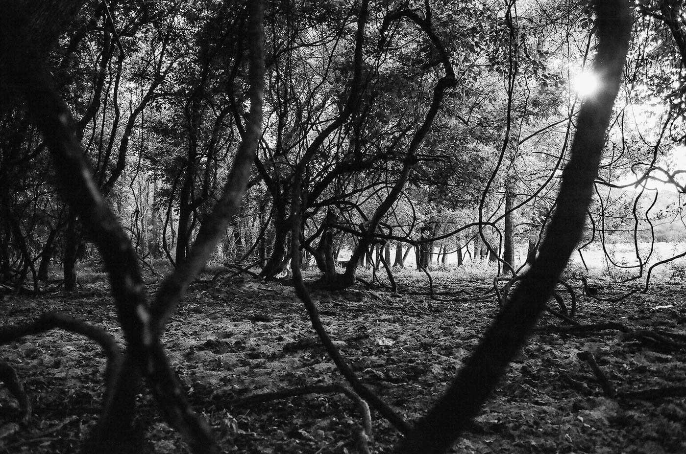 fujifilm-neopan-acros-100-plus-2-krista-michaels-photography-10.jpg