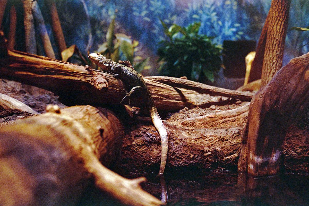 kodak-ultramax-400-zoo-005.jpg