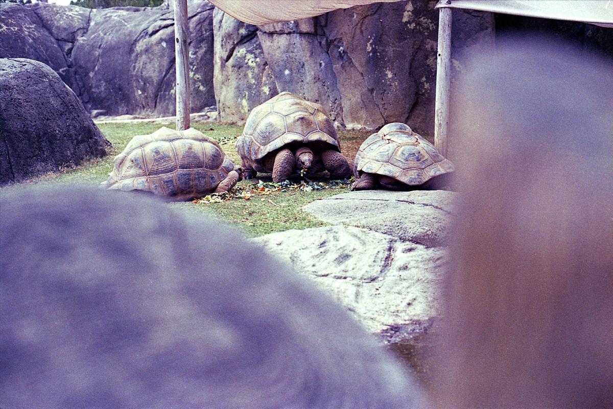kodak-ultramax-400-zoo-020.jpg