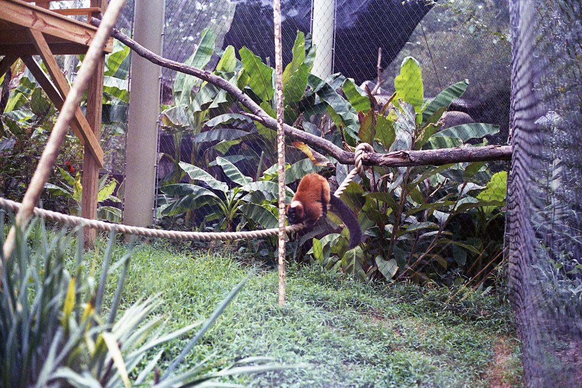 kodak-ultramax-400-zoo-021.jpg