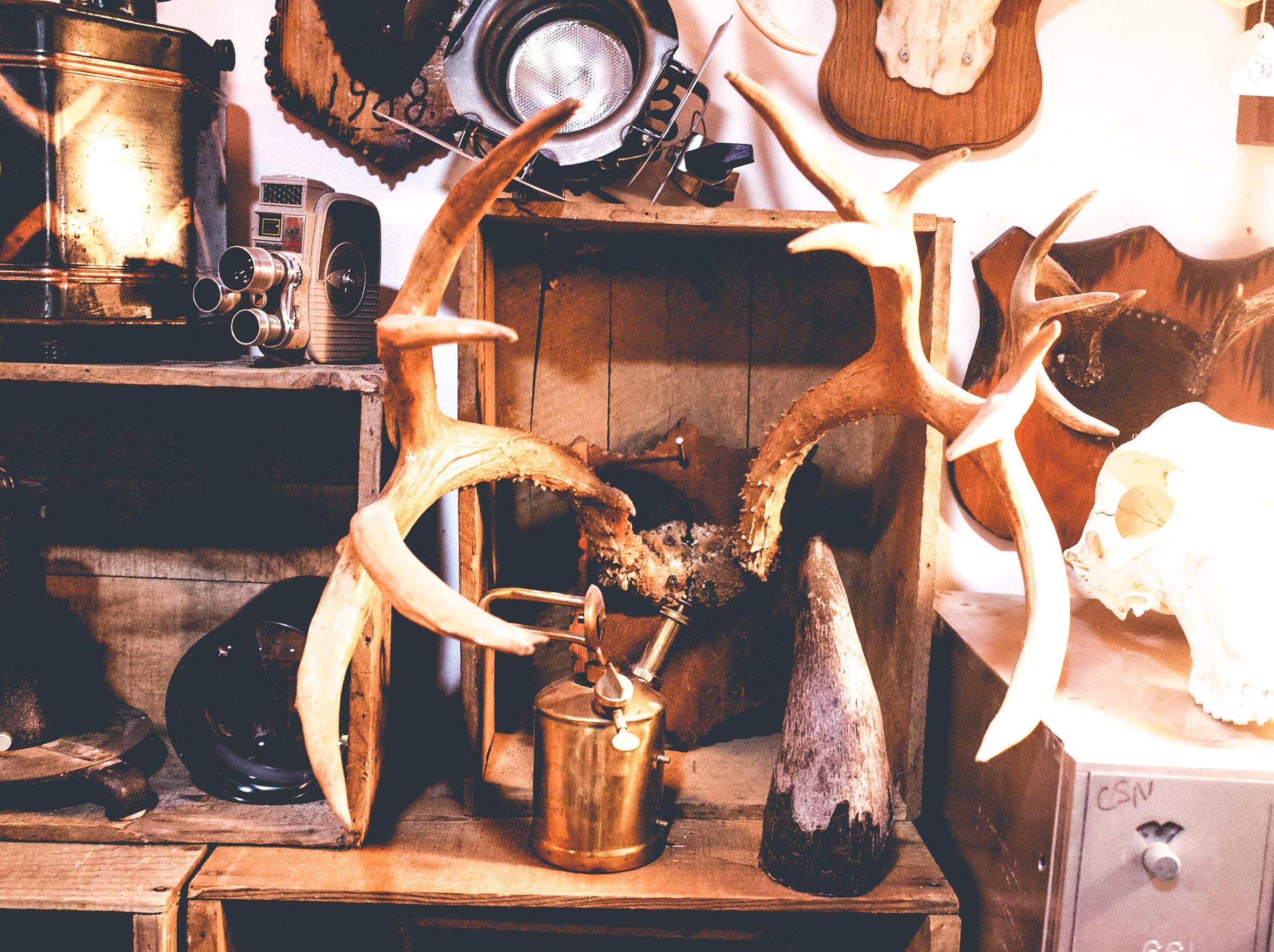 deers-antlers.jpg