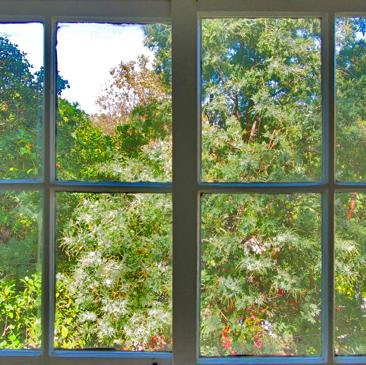 TREE_HOUSE_WINDOW_sq.jpg