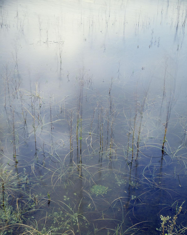Grasses, Whatipu lagoon (1984)