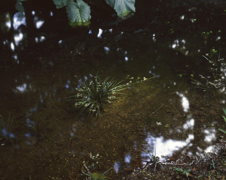 Sedge and pool, Manurewa (1985)
