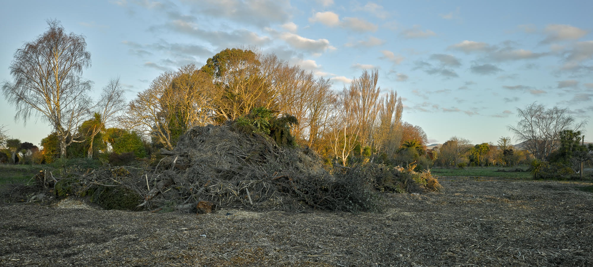 Keller St, Avonside, 2015. Non-indigenous plants and domestic greenery cleared from residential red zone land.