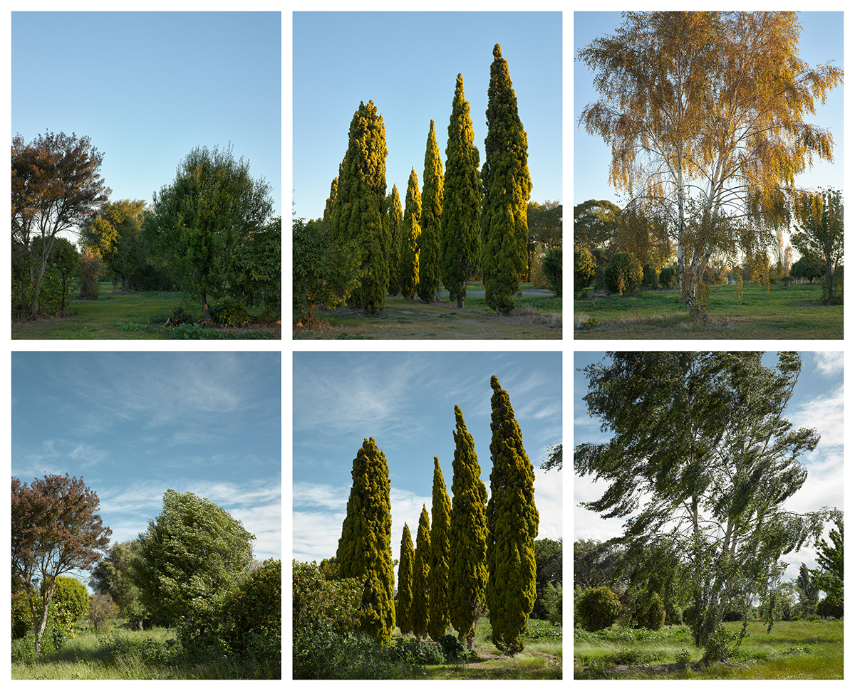 Halley Place, Avonside, 2015, autumn and 2016, spring, during a nor-west wind.