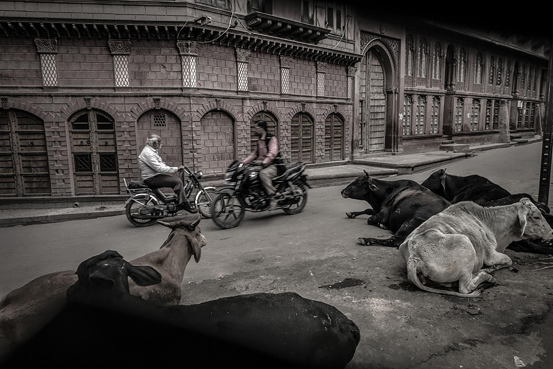 Cai Huansong  Bikana, India , 2015