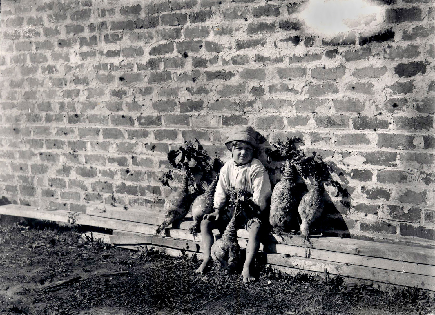 George Pauling's son Len sits with giant turnips by their home in Toru Street. Bricks from the Henderson Brick and Tile brickyard were used in the construction of this cottage, c.1925. West Auckland Historical Society, Henderson.