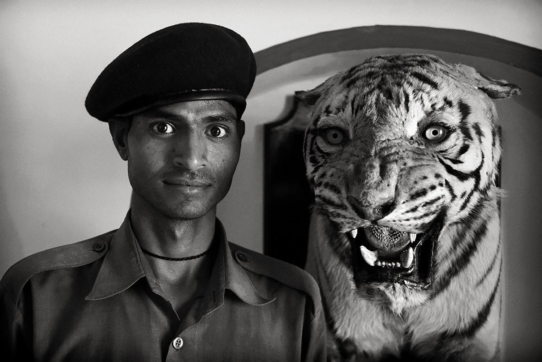 Julian Ward:  Guard and Tiger. Bundi, Rajasthan,India  2010