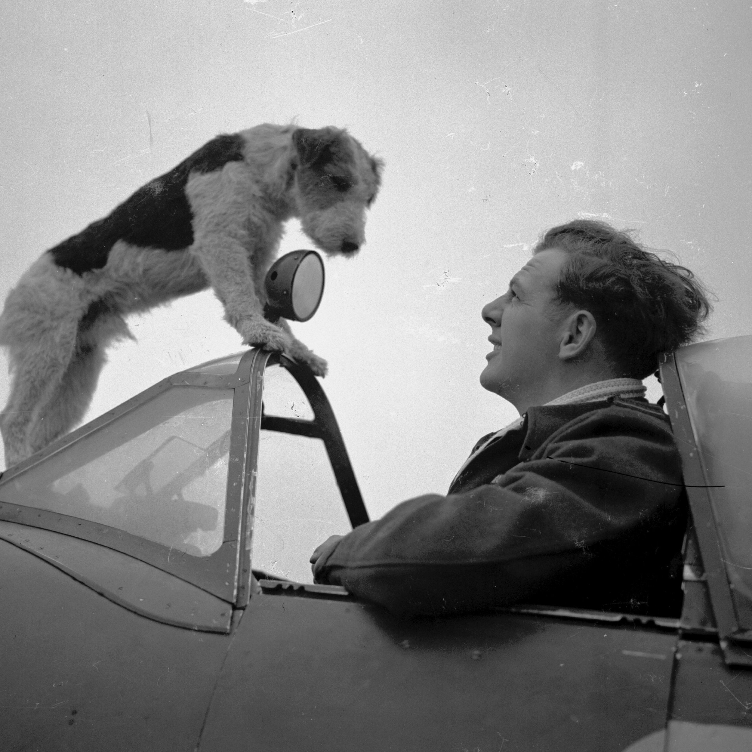NZ fighter ace Des Scott with his terrier, Kim (Photo: Air Force Museum of New Zealand)