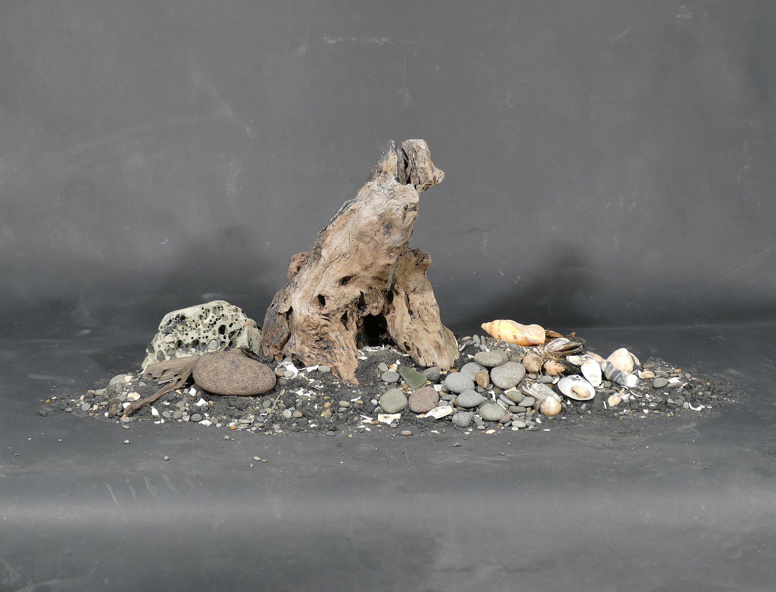 Kevin Capon,  Black sand, rocks, shells, driftwood arrangement ,  Mokau , 2017