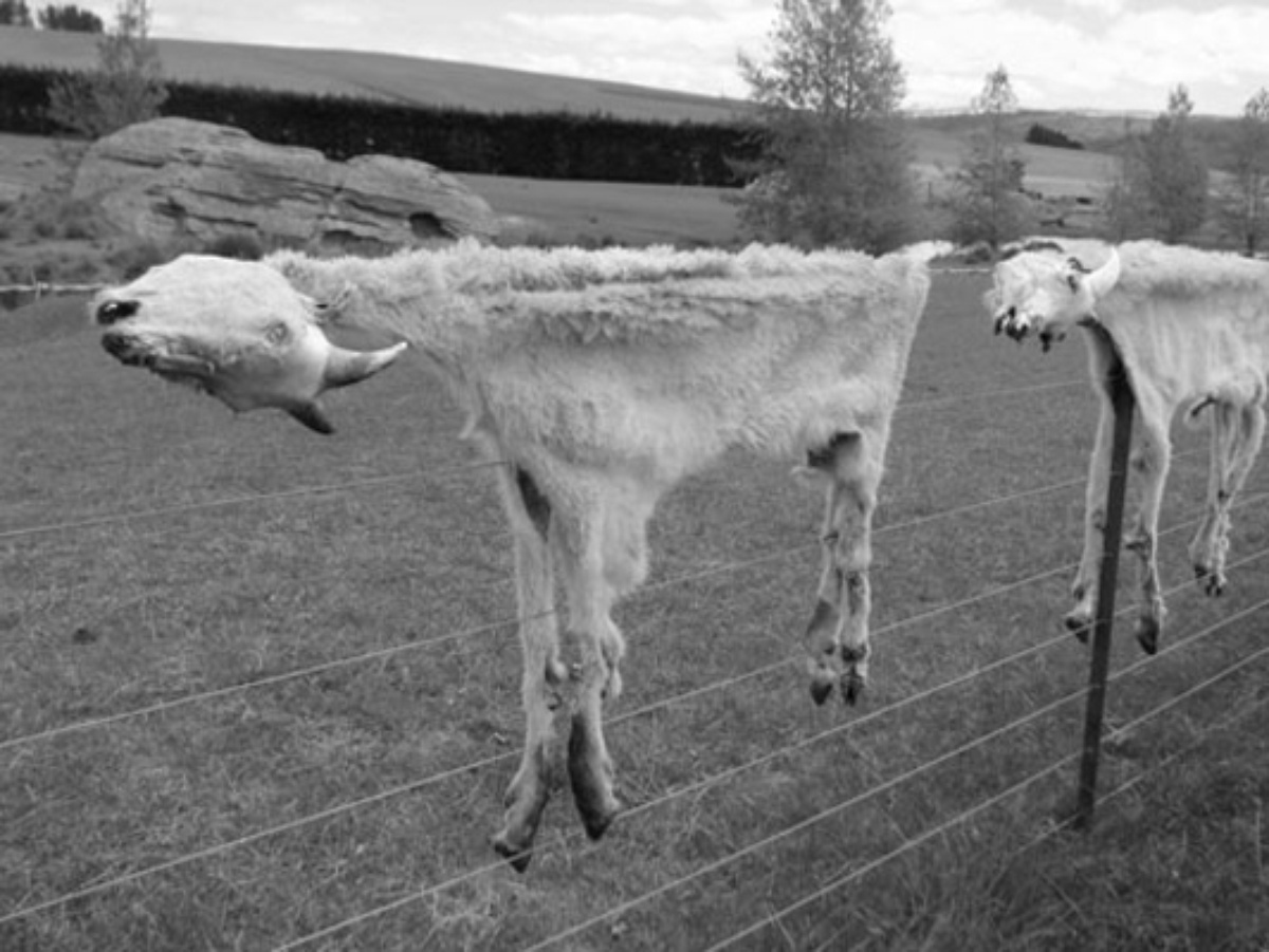 Peter Peryer   Two Goats,  2007