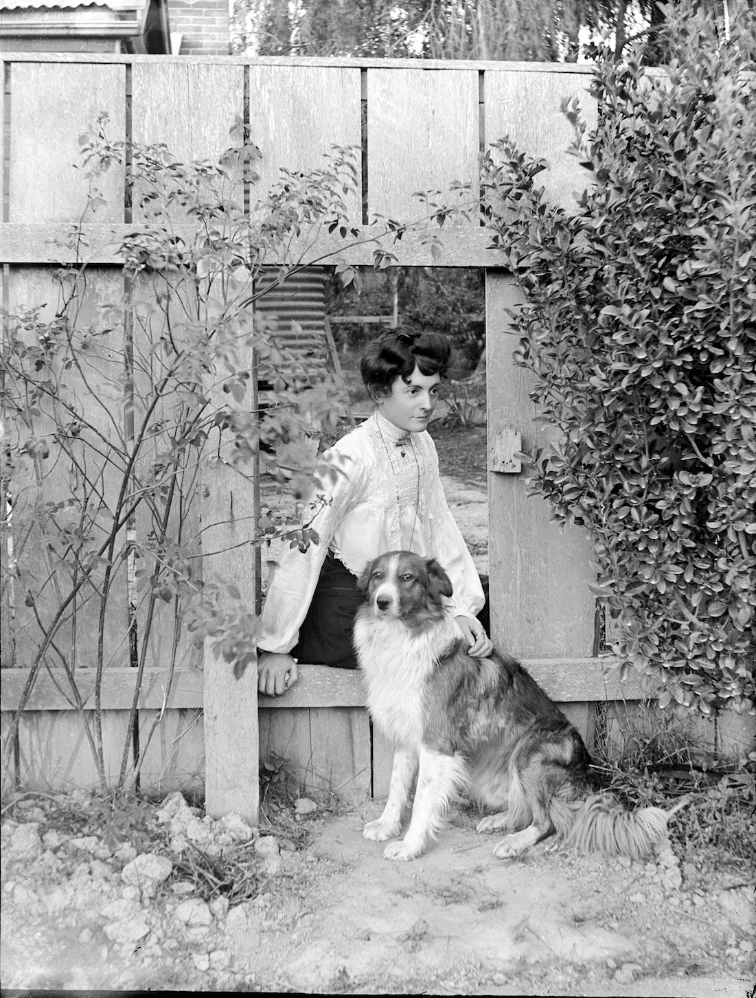 Woman posing with dog, likely taken in the North Island, New Zealand , circa 1907-1911. Lemuel Lyes Collection.
