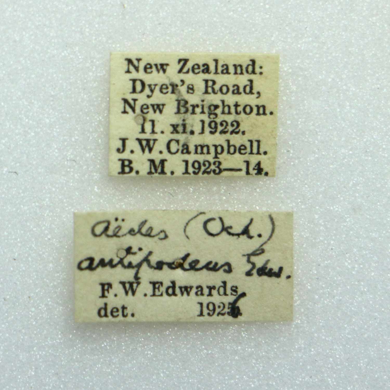 Aedeus antipodeus mosquito labels. James Wishart Campbell collector. Canterbury Museum