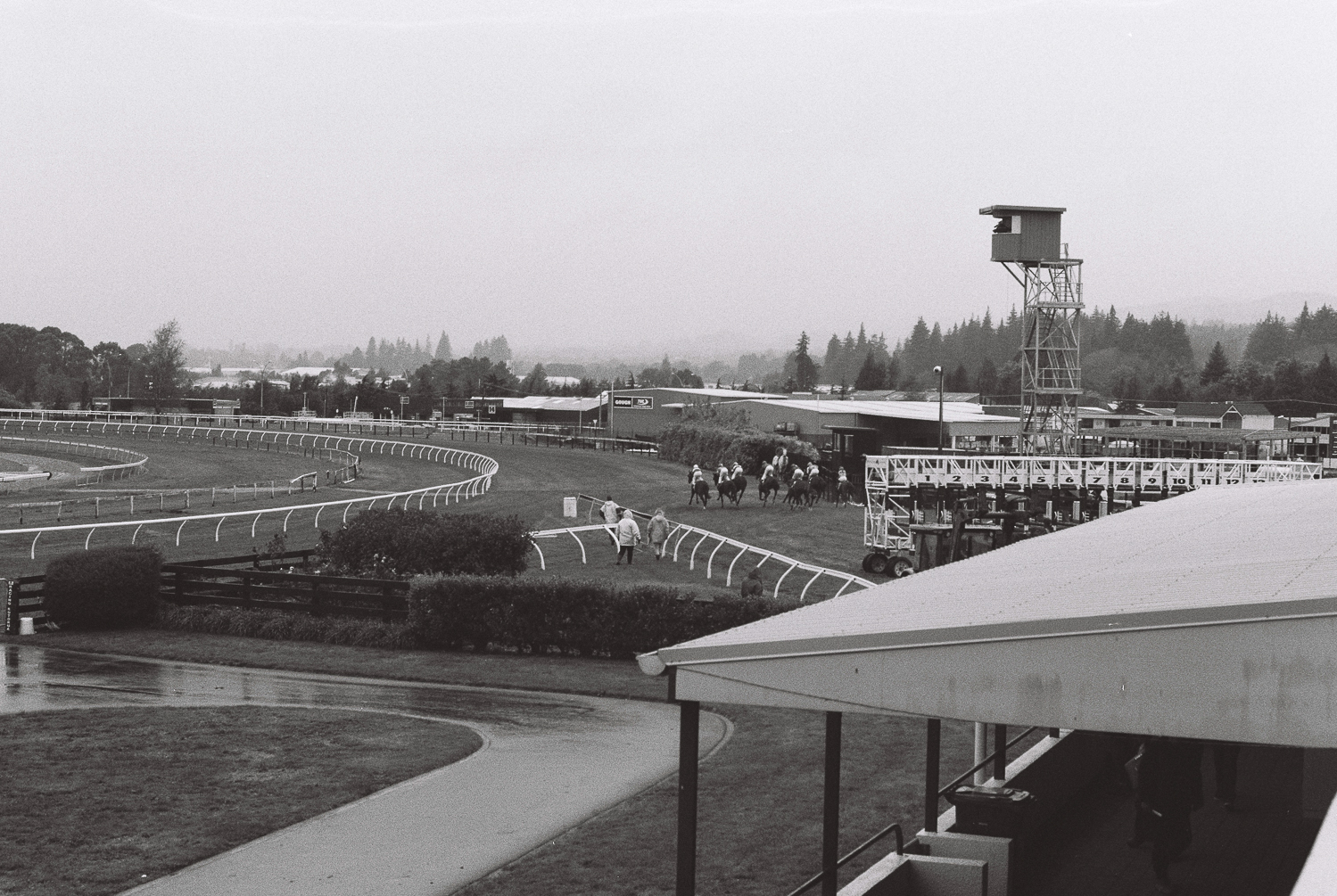 Race start, Rotorua Racecourse, April 2019