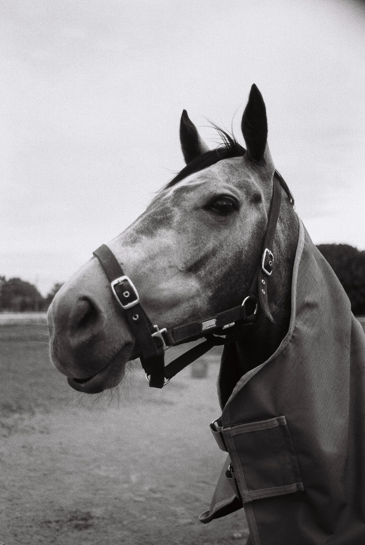 Racehorse, Woodville Racecourse, February 2019