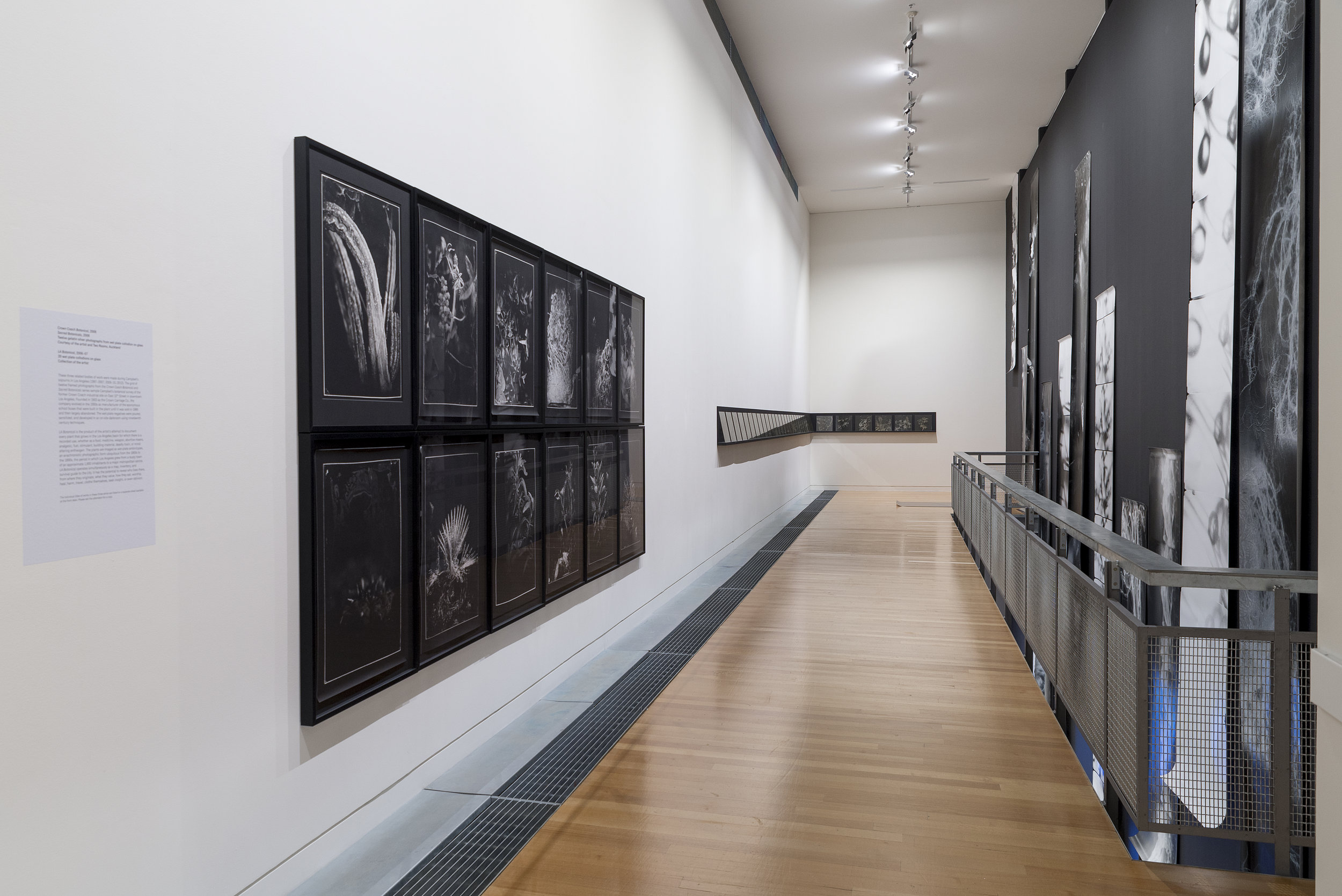 Installation view of  On the Last Afternoon: Disrupted Ecologies and the Work of Joyce Campbell