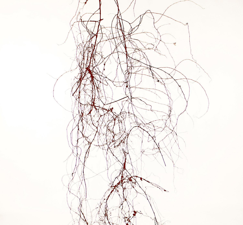 Lisa Clunie ,  Anatomy of Disarray (scrambling pohuehue) , 2019