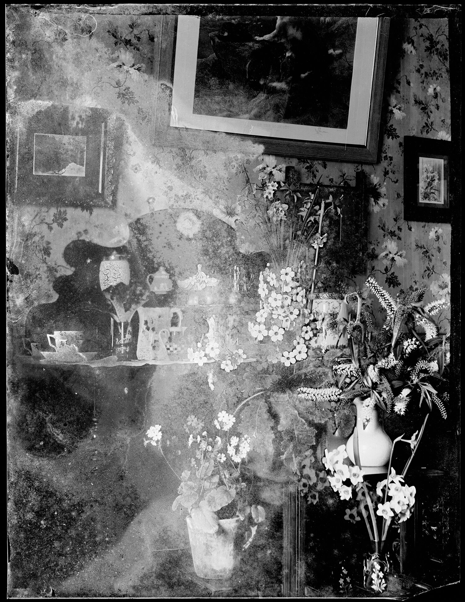 Robina Nichol,  Interior with hebe, primula, daffodils on dresser , dry plate negative, c. 1895-1916. Courtesy of the National Library.