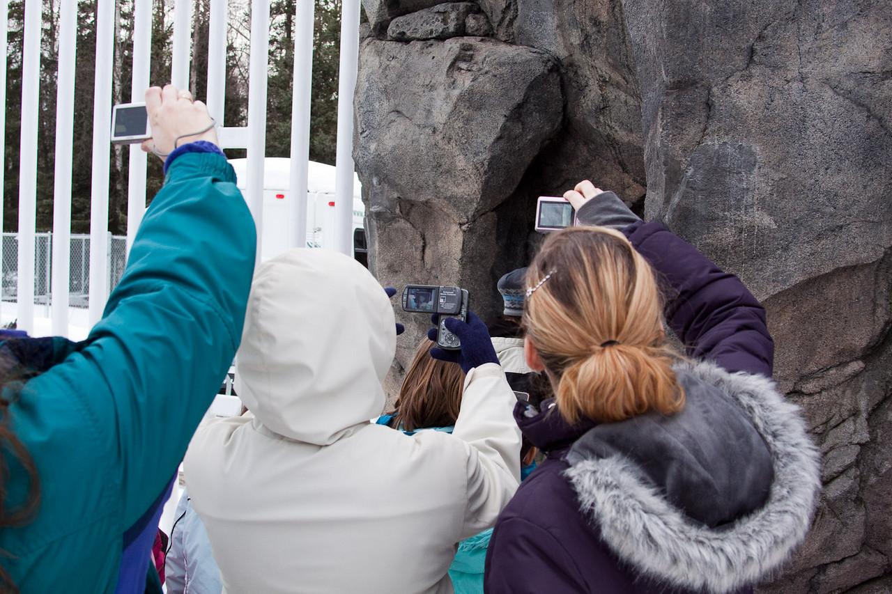 gs polar bear.jpg