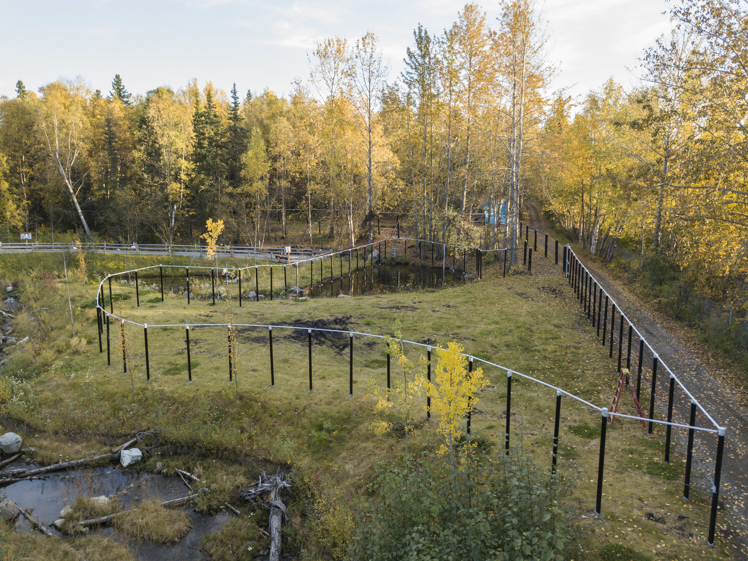 Aerial view of the completed Little Campbell Creek restoration area with the new moose habitat fence in place. Image by John Gomes,  www.akjohn.com .