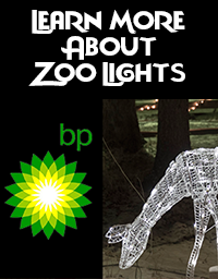 zoolightsbutton.png