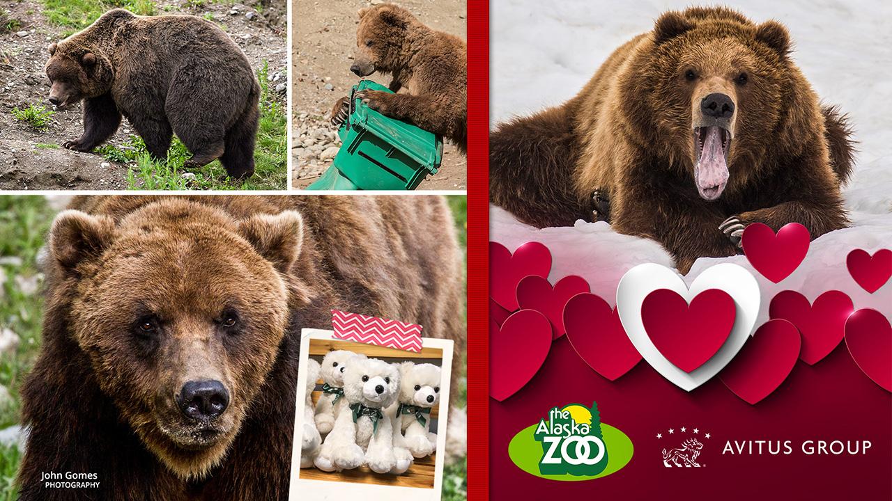 Brown Bear 1280x720.jpg
