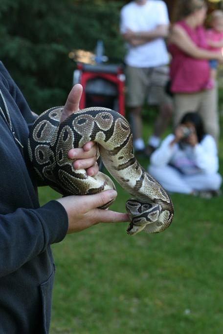 tnaz snake.jpg