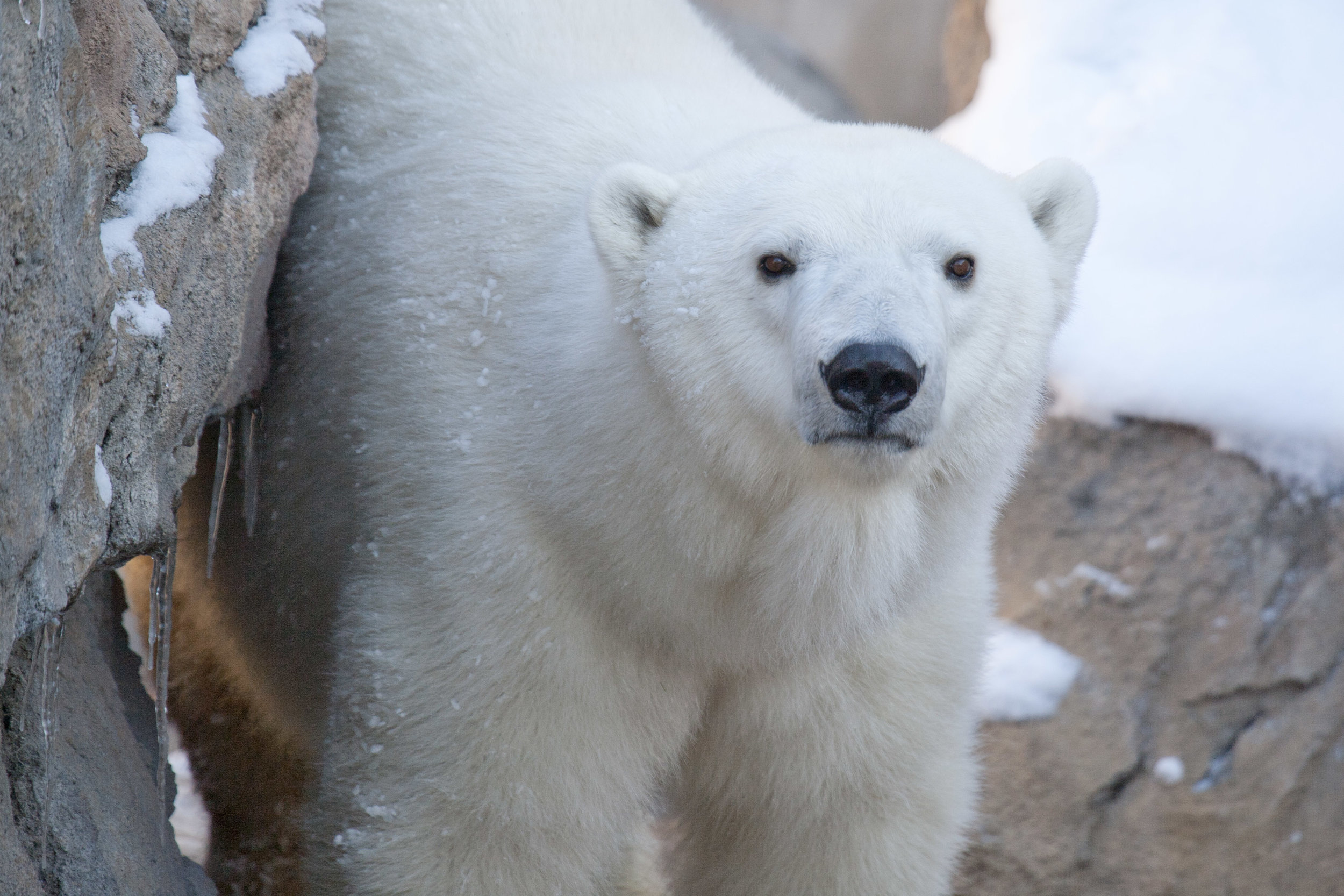 Image of Cranbeary courtesy of Denver Zoo.