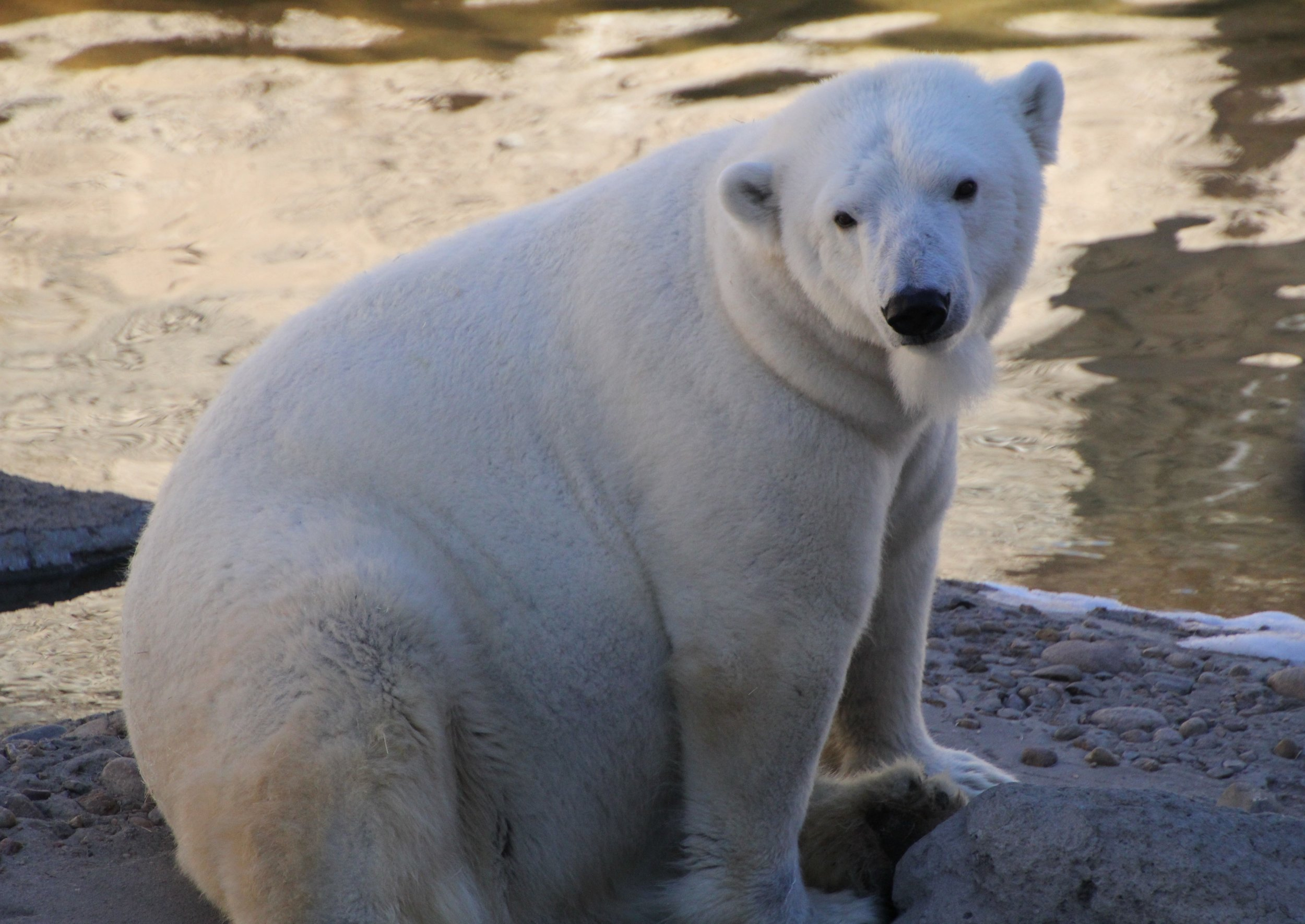 Image courtesy of Denver Zoo.
