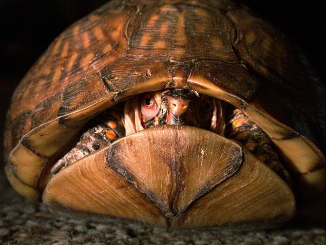 turtle6132.jpg
