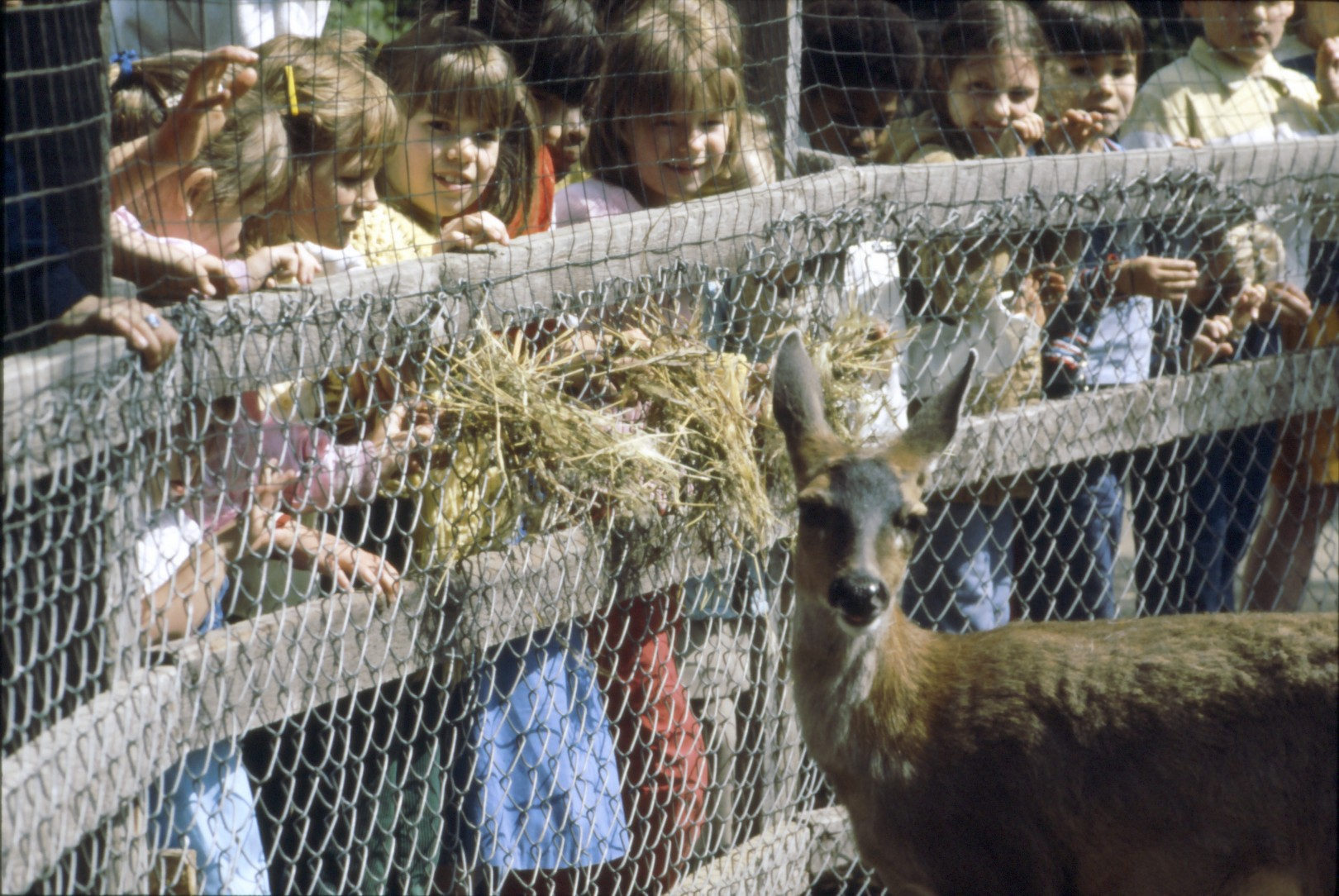 Vintage Pictures of Alaska Zoo 387.jpg