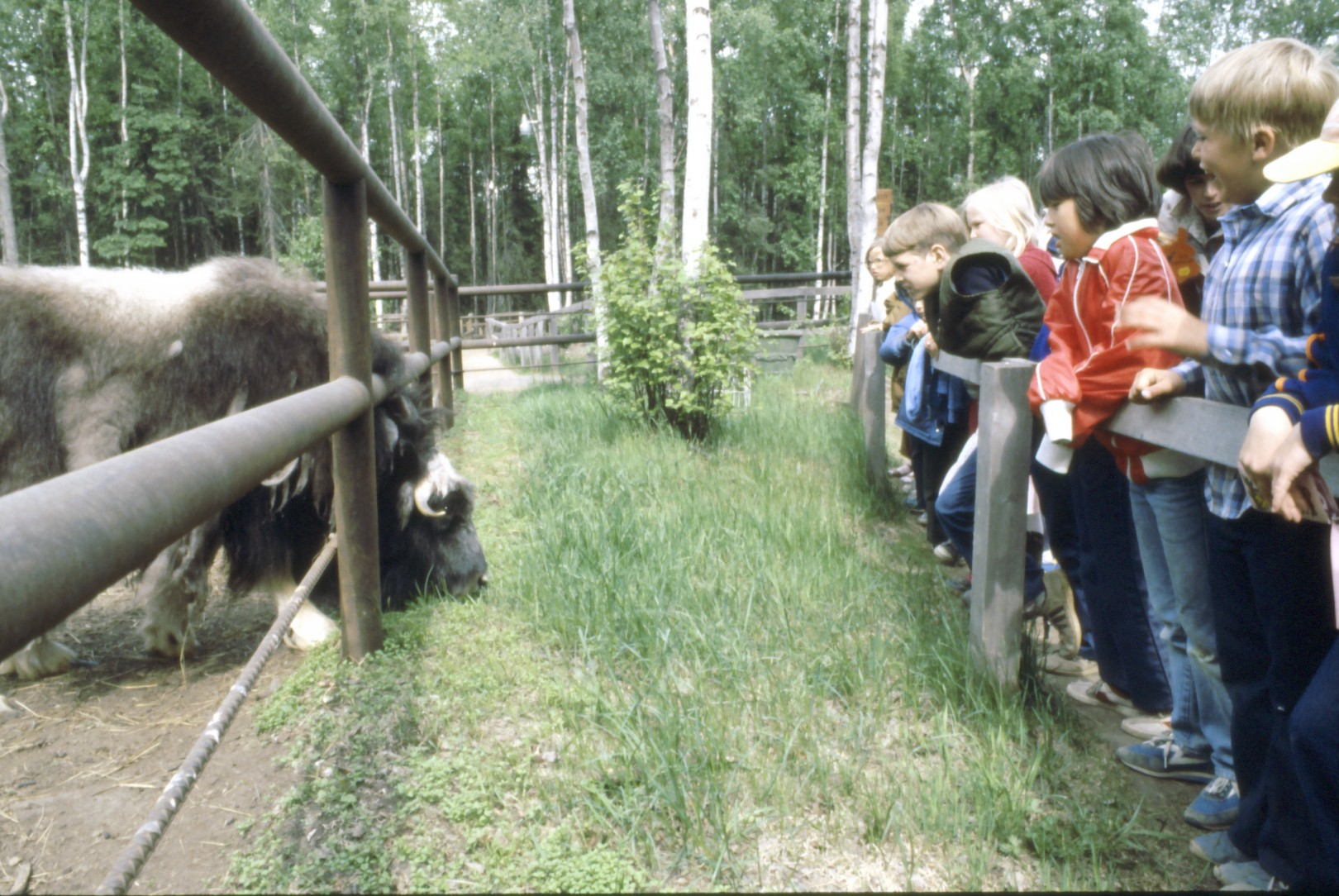 Vintage Pictures of Alaska Zoo 407.jpg