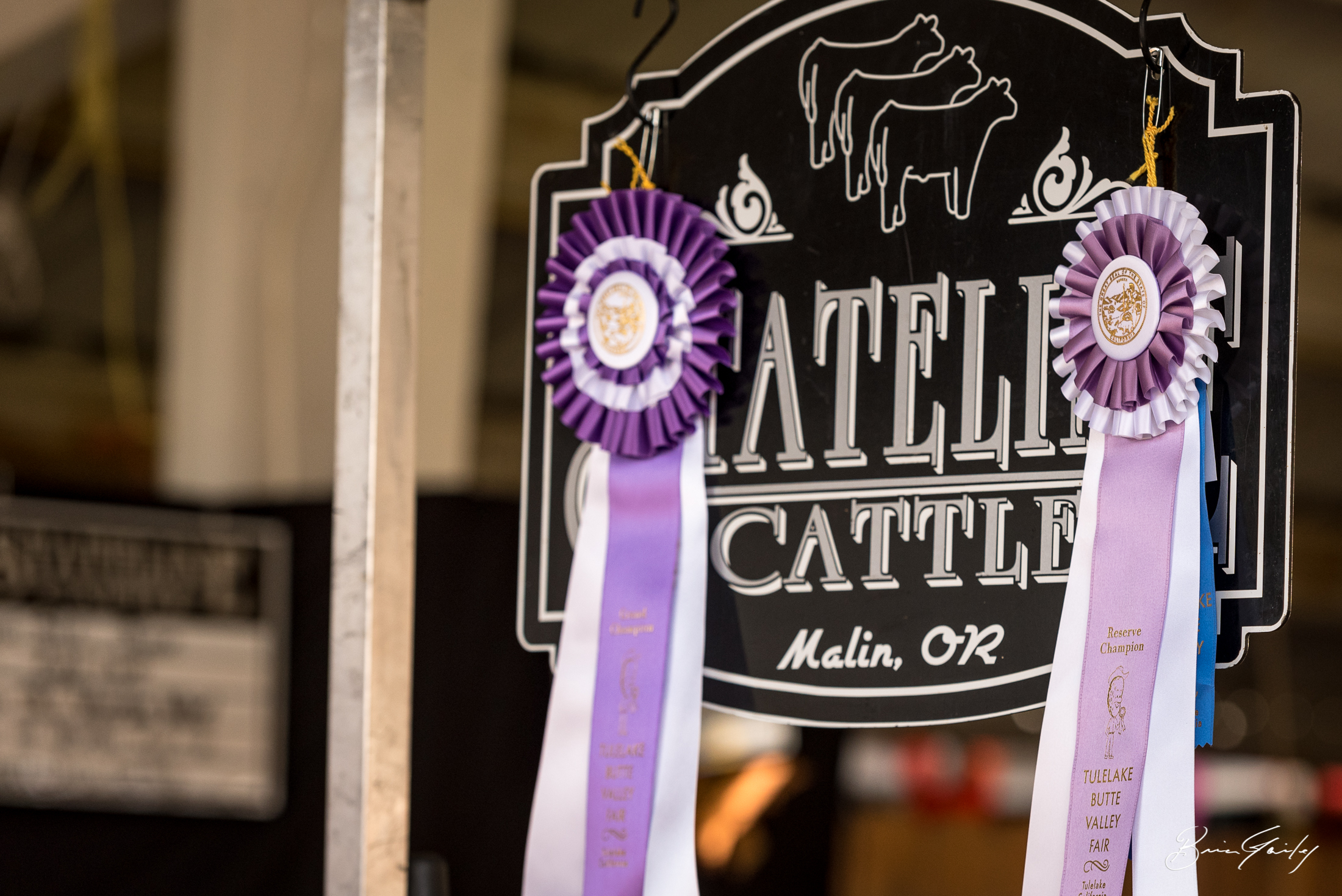 Stateline Cattle Co.  did well at the fair.  Image:  Brian Gailey  Tulelake Butte Valley Fair 2017