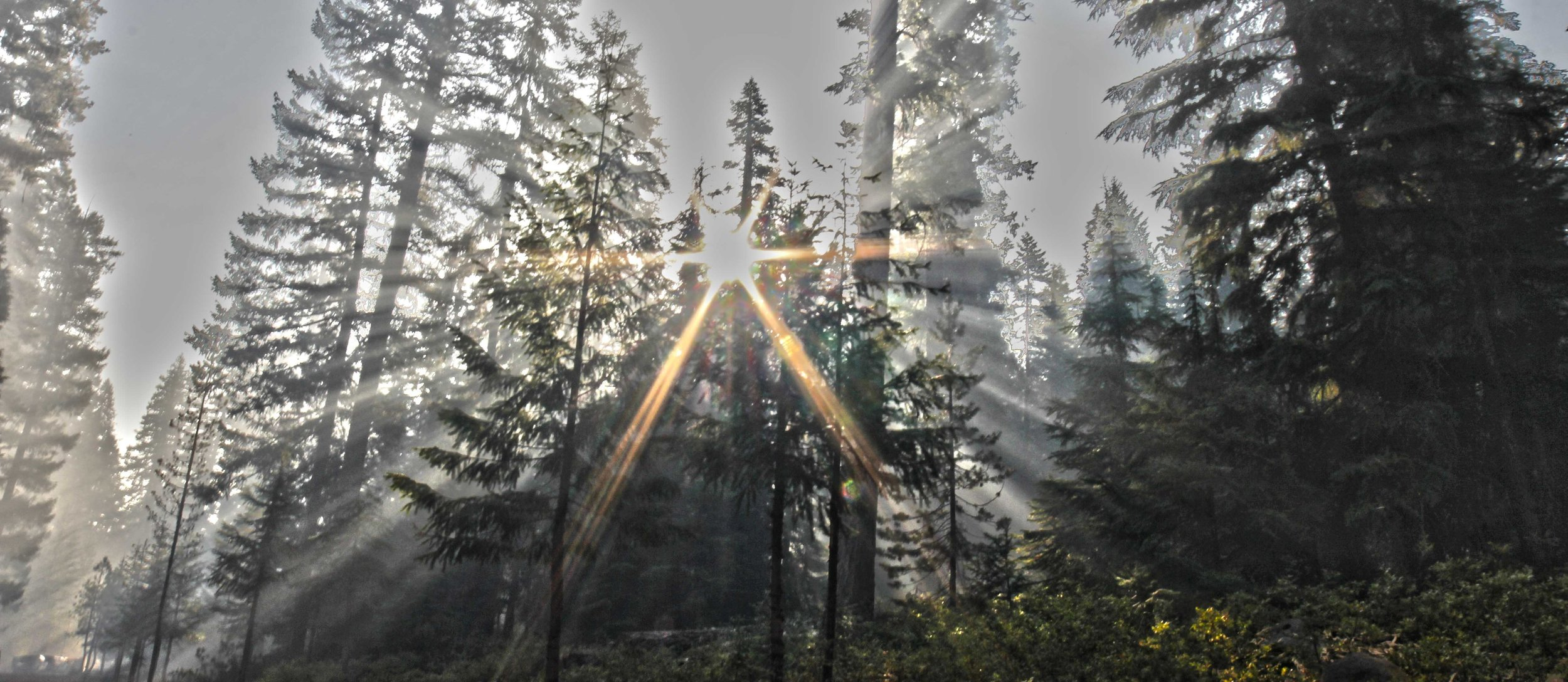 Smoke Filters through the trees on the East Zone (Inciweb)
