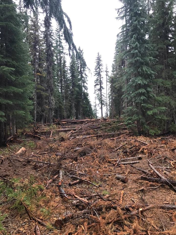 Placing downed vegitation on a dozer line during rehab helps with errosion and reforestation of the disturbed area. (inciweb)