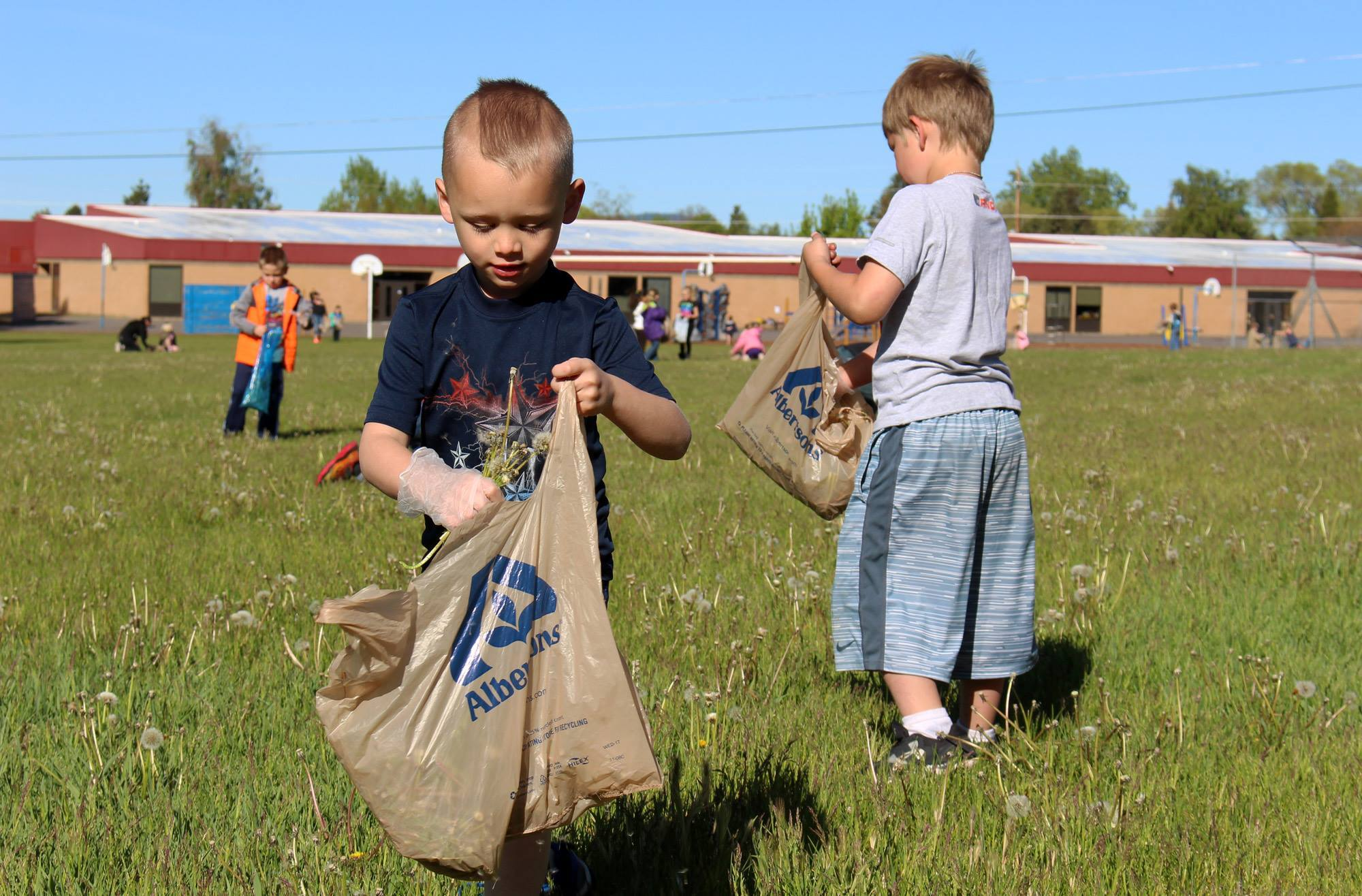 Shasta Elementary kindergarteners pick up litter and pull weeds on the school grounds during Give Back Day on Thursday, May 18. (Samantha Tipler)