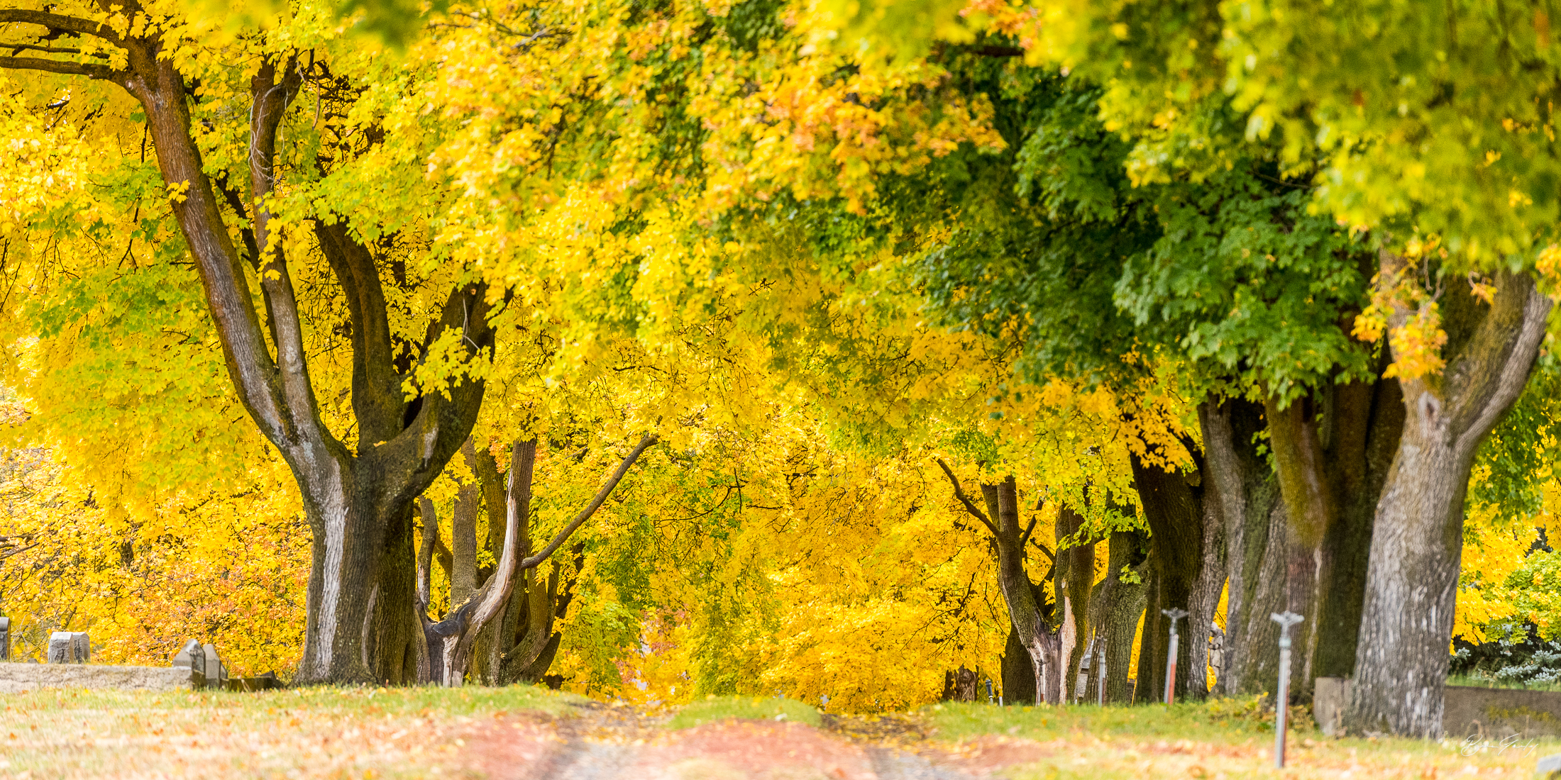 Fall Colors in the Linkvill Cemetery. Established in 1885, a walk through the Cemetery will bring to mind many pioneers of the Klamath Basin, including Melhase, Schallock, Biehn, Applegate, Gerber, Murdock, Baldwin and Summers to name a few. (Klamath Co. Historical Society) Image: Brian Gailey