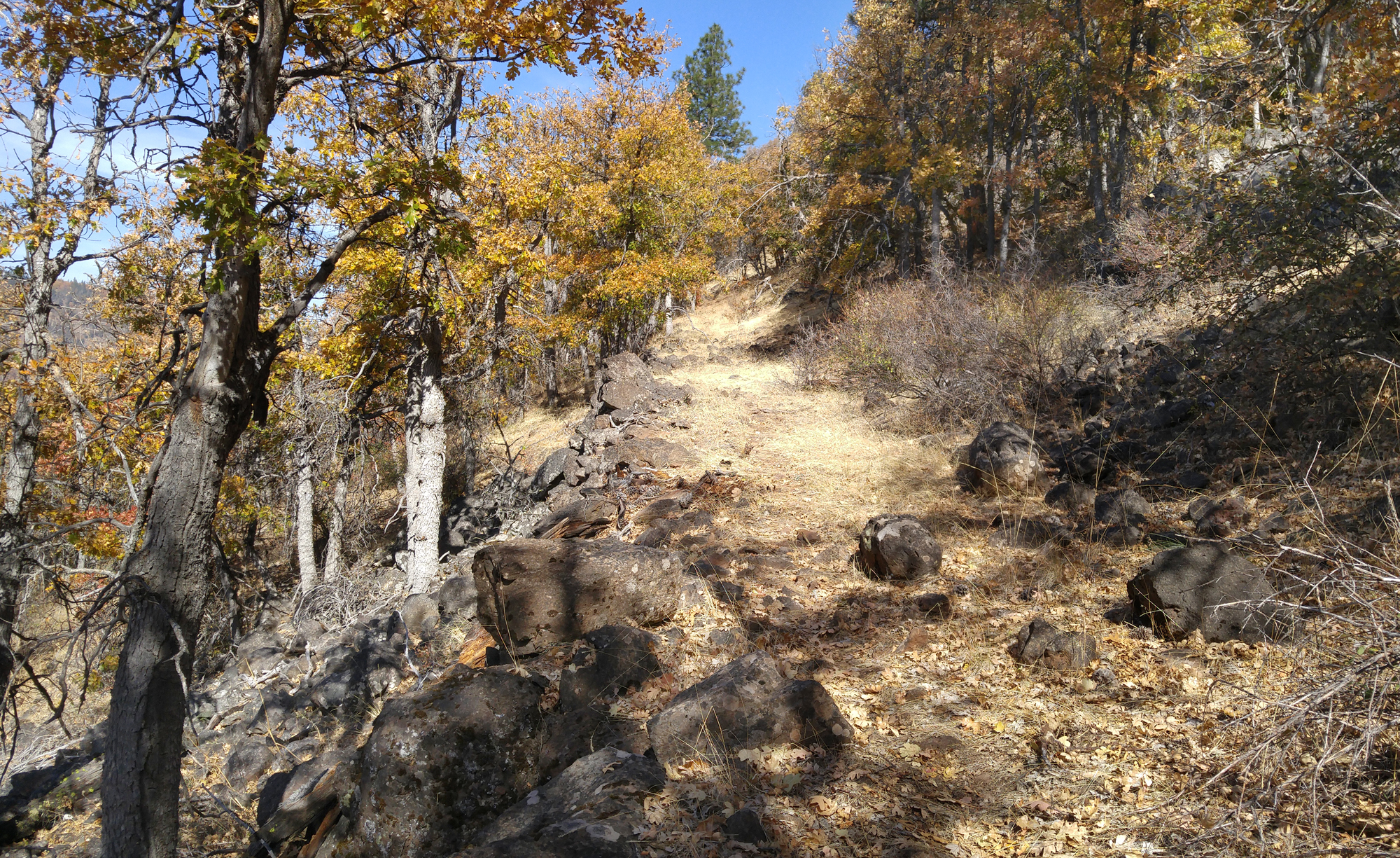 A history hike will explore long-abandoned wagon roads, such as the one shown in this photo, in the Topsy Grade area of the Klamath River canyon. (Klamath County Museum)