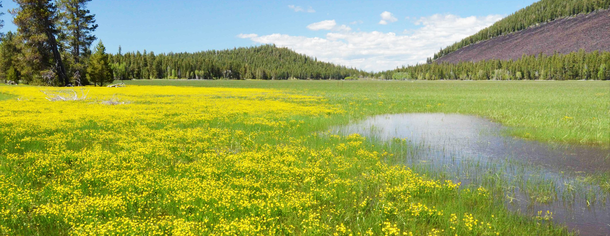 Choptie Prairie, located about 15 miles north of Klamath Falls, is among the ephemeral lakes in Southern Oregon that support a unique mix of plants and wildlife. (Klamath County Museum)