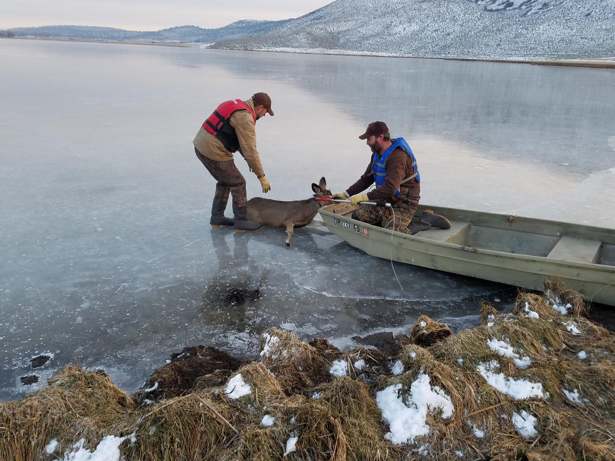Oregon State Police and Oregon Department of Fish and Wildlife rescue a stranded deer on Spring Lake in Klamath County. (Oregon State Police)