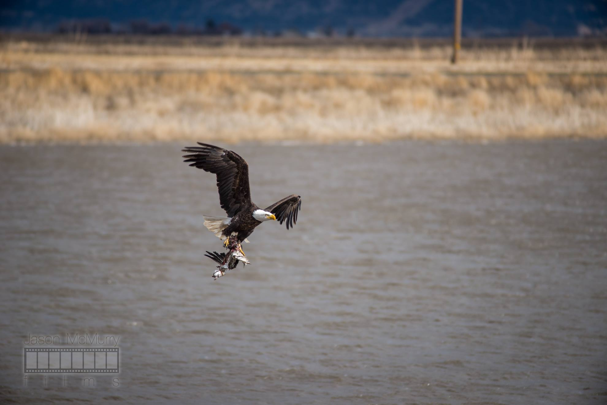 A Bald Eagle and his catch at the Tule Lake NWR.Image by  Jason McMurry